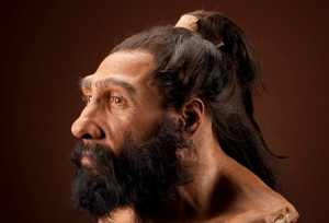 Homo neanderthalensis adult male. Reconstruction based on Shanidar 1 by John Gurche for the Human Origins Program, NMNH. Date: 225,000 to 28,000 years.